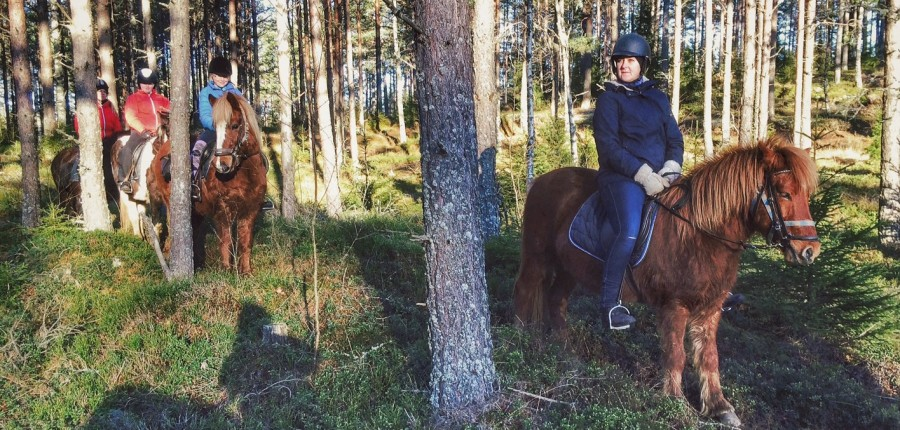 Pferde reiten , turridning, islandhäst