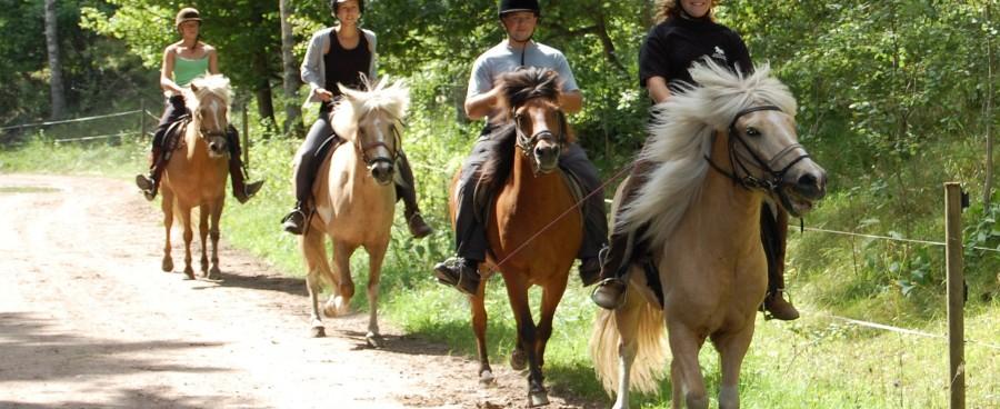 Horse riding, Turridning, Islandshäst