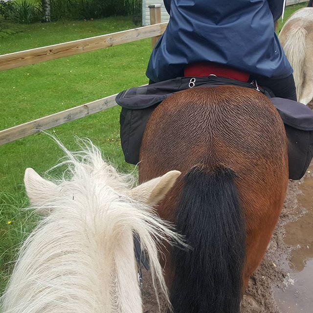 En härlig dag med islandshästar i Kyrkekvarn #islandshäst #kyrkekvarn #jobbarkompisar