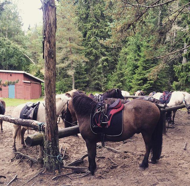 Fikapaus med #kollegor och #islandshästar  #kyrkekvarn #kyrkekvarnsislandshästar #häst #ponny #lördag #jobbaivaggeryd #turridning #fika #skog #natur
