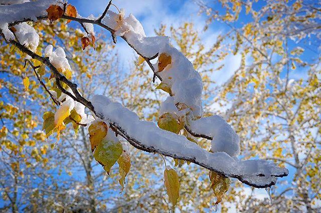 Första snön. Kyrkekvarn. #kyrkekvarn #västergötland #sweden #schweden #sverige #snö #snow #höst #herbst #autumn #natur #naturfoto #nature #naturephotography #naturelovers #fujifilm #fujifilmxt1  #fujifilm_xseries #fujixt1  #xf1855