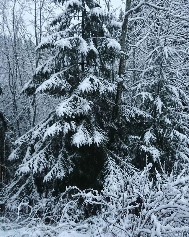 Hej, mitt vinterland ️️ #millieville #lindashunderi #kyrkekvarn  #hundinstruktör #hundkurs #hundkurser #workshop #rallylydnad #snö #vinter #snow #winter #sverigeshundungdom