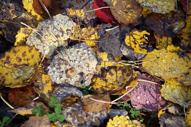 Herbstlaub in Schweden #schweden #tropfen #laub #farben #blasen #kyrkekvarn