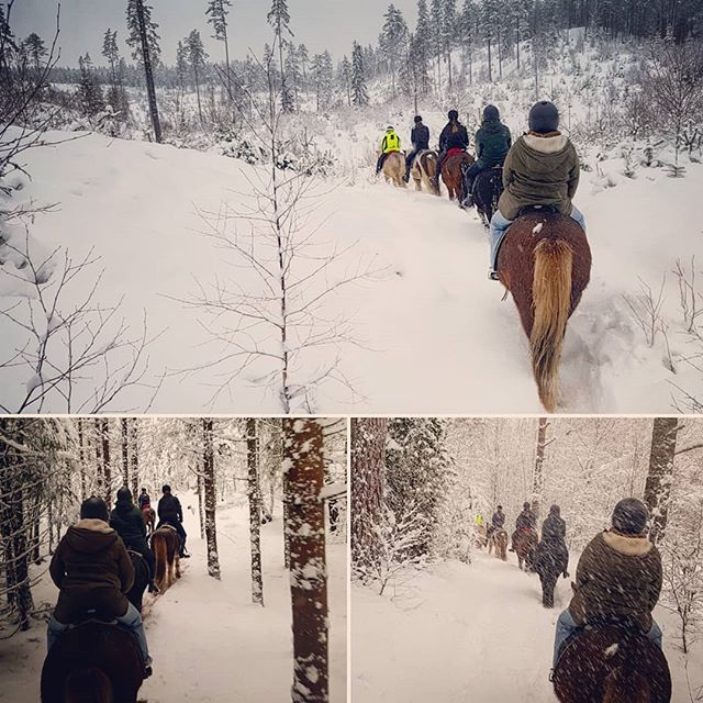 Horsback riding at Kyrkekvarn in wintarlandscape. Some days are better than other... ☃☃ #kyrkekvarn  #islandshästar #winter