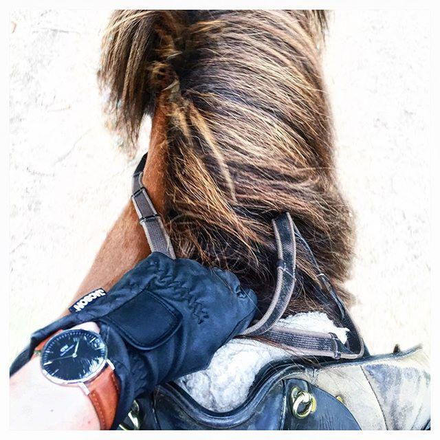 Miss this ️ #islandshäst #kyrkekvarn #riding #danielwellington #inspo #tumblr
