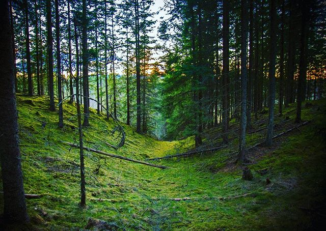 sweden-kyrkekvarn-nikon-forest-nature-relax-with-friends-sunset-jonkoping