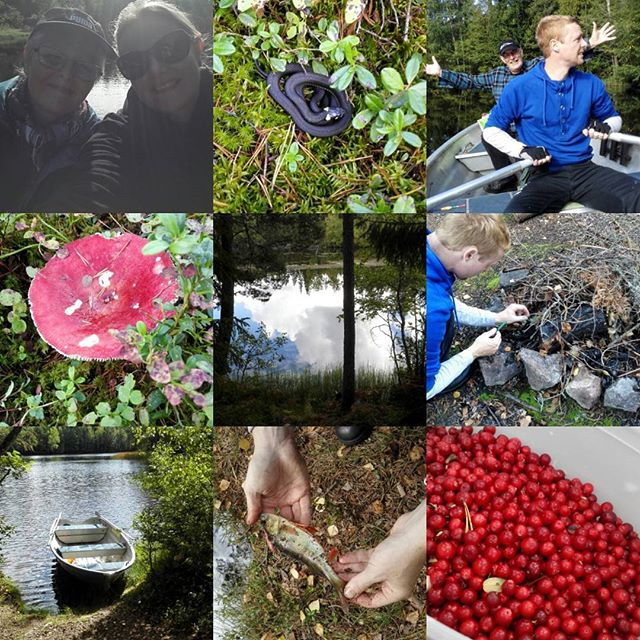 Tur i vildmarken  #sverige #kyrkekvarn #tyttebær #snog #aborre #fiskeri #robåd #natur #bål #afslapning