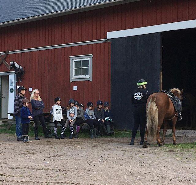 Turridningen börjar alltid med att personalen går igenom och informerar kring turen och vad man ska tänka på när man sitter på hästryggen.  #horse #horses #icelandichorses #islandshästar #kyrkekvarn #turridning #instahorse #icelandichorsesofinstagram #kyrkekvarnislandshästar #urlaub #vacation #aktivitet #outdooradventures #gooutside #visitsmaland #visitsweden