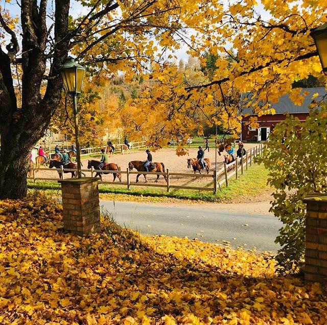 Vart fixar man en överraskningsfest till en häst-tokig storasyster om inte på kyrkekvarn med övernattning i stallstugan och idag ut på en turridning i detta fina höstväder  _ _ _  #kyrkekvarn #kyrkekvarnsislandshästar
